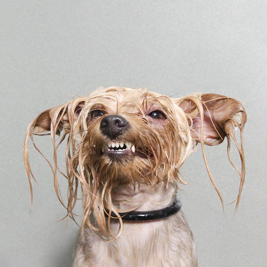 Cachorros Molhados, um adorável ensaio de cães tomando banho por Sophie Gamand.