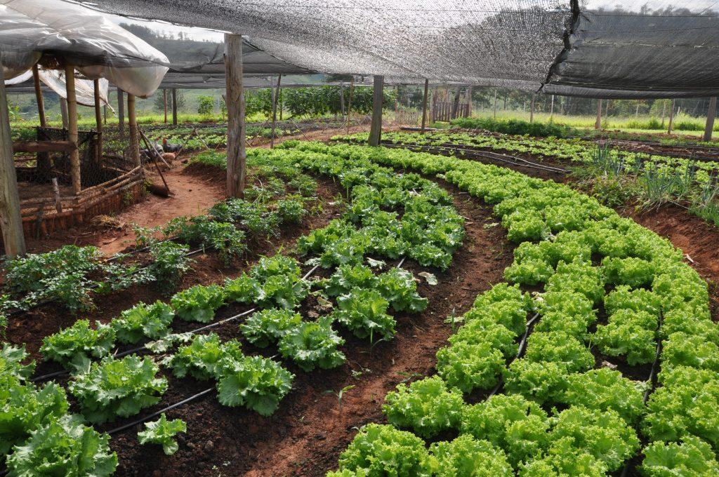 agricultura-organixa