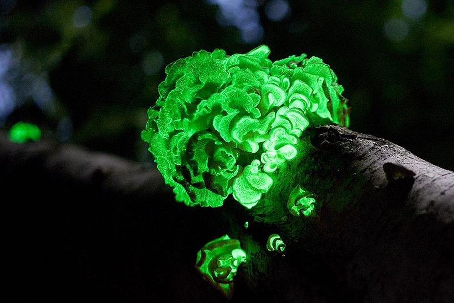 12 fenômenos naturais espetacularmente belos