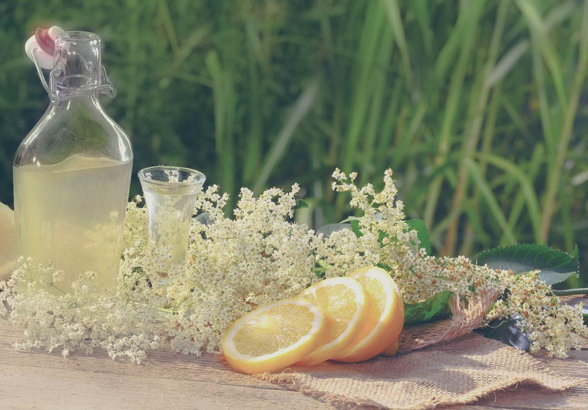 Aprenda a fazer um espumante de flores de sabugueiro