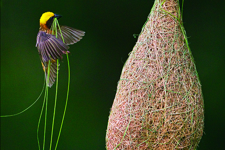 O incrível mundo da engenhosidade animal