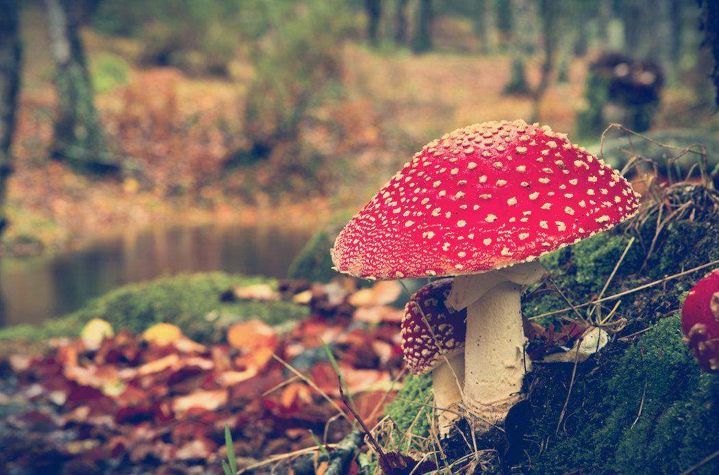 Gifs mostram o espetacular crescimento dos cogumelos na natureza