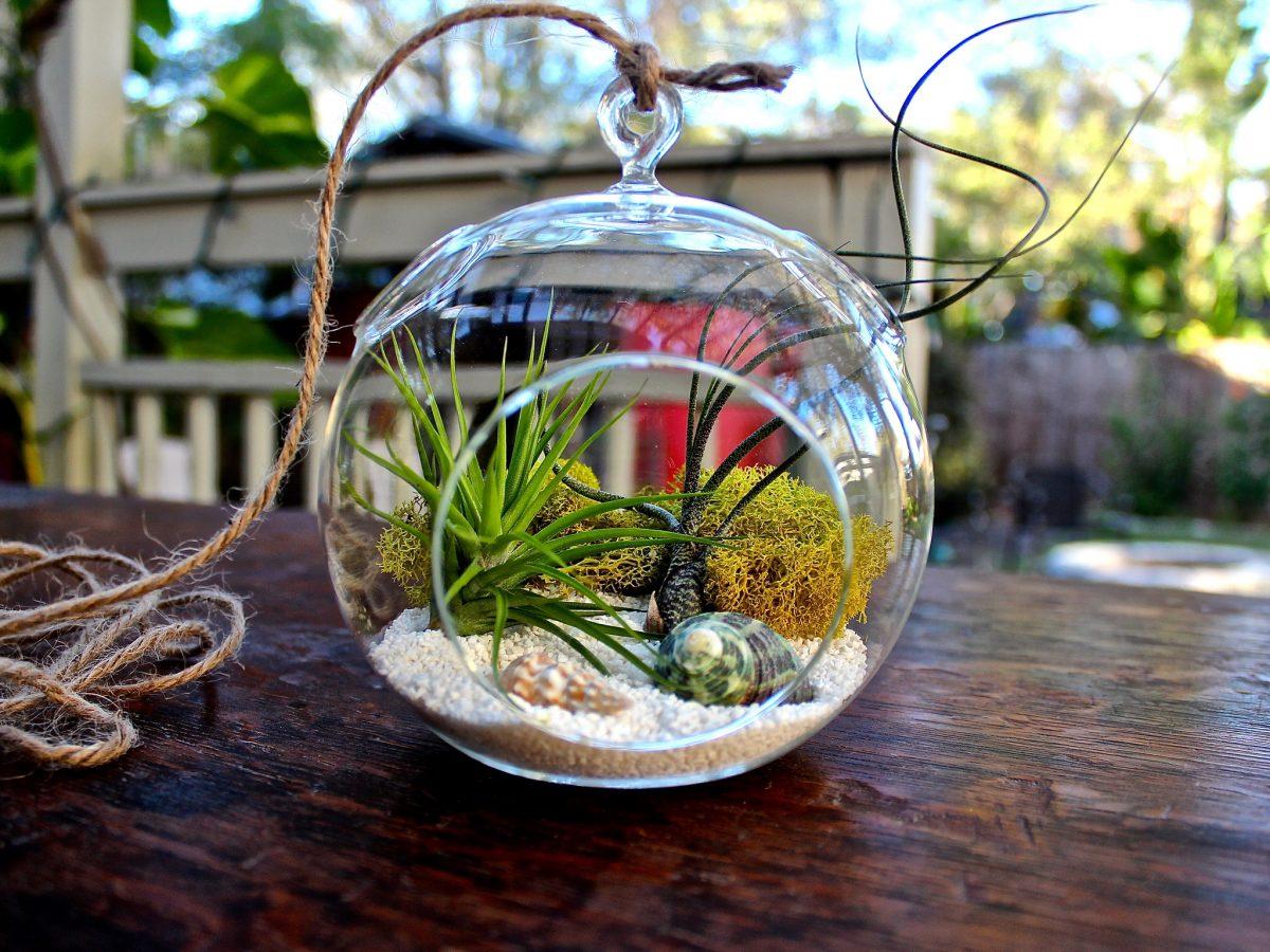 Terrário: aprenda a montar um mini ecossistema em sua casa