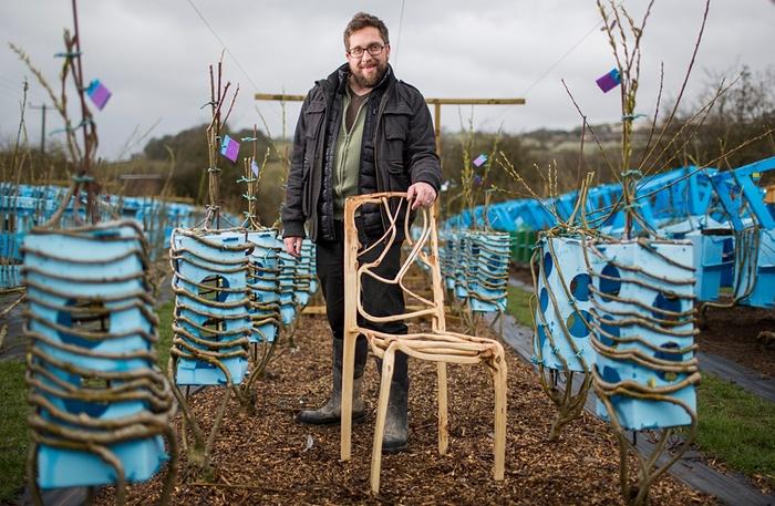 Já pensou em plantar sua própria mobília?