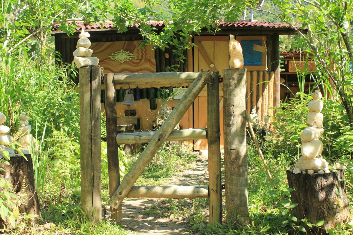 Conheça a história de uma serraria que virou floresta
