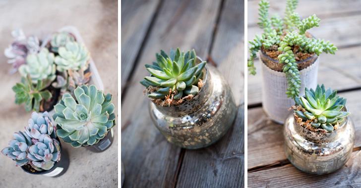 Suculentas, as plantas ideais para quem tem pouco tempo