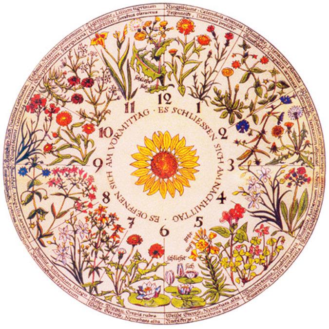 Plante um relógio que mostra o horário a partir das flores