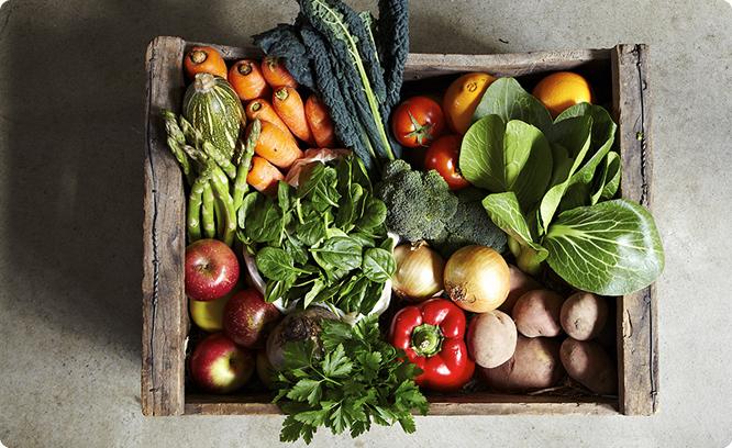 3 cartilhas sobre agricultura orgânica que você precisa ter