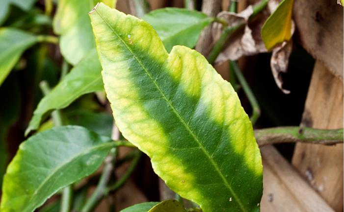 Reconheça sintomas de carência nutricional em plantas