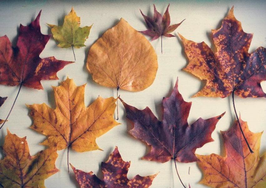 Faça Você Mesmo: Abajur de Folhas Secas de Outono