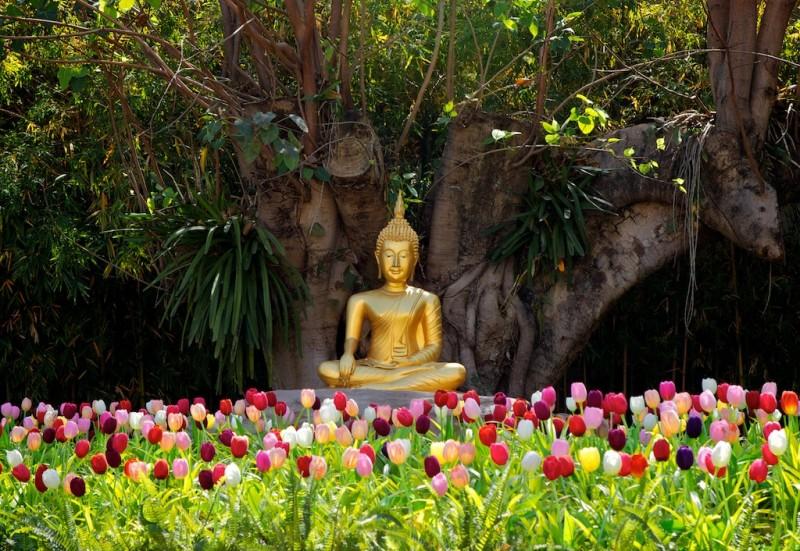 Primavera humana: meditação para o florescimento das relações