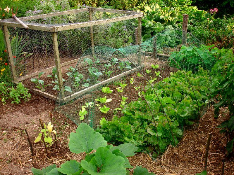 O Manifesto da Primavera ou Vamos Fazer uma Horta?