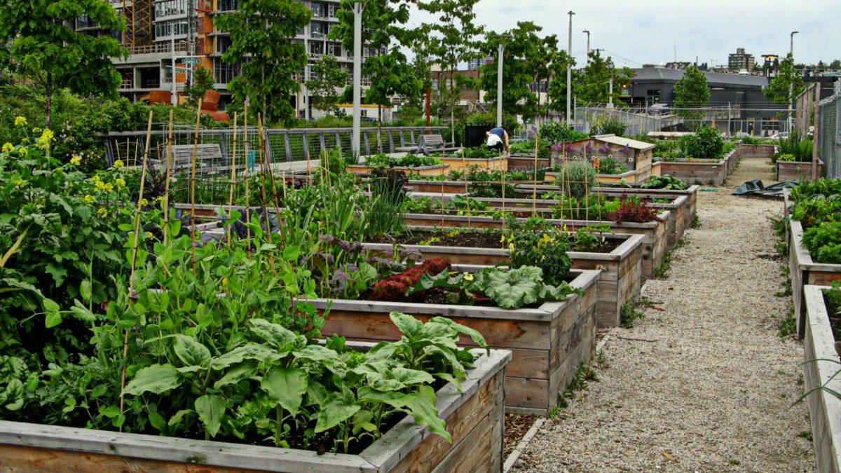 Hortas urbanas e a ressignificação da cidade
