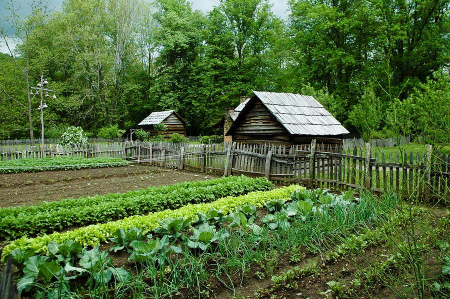 4 maneiras de manter sua horta livre da Monsanto