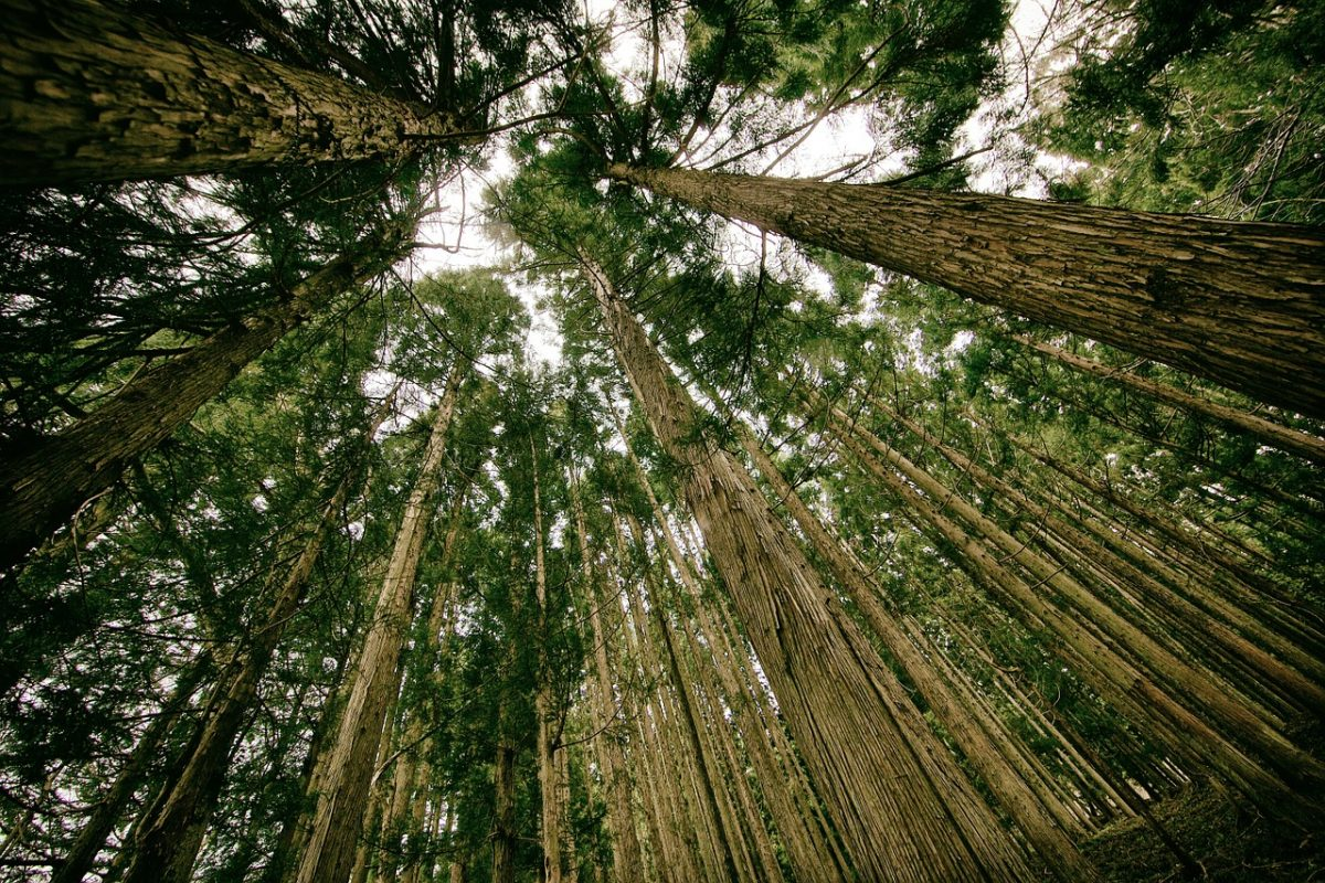 A vida secreta das árvores