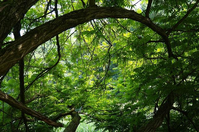 tree-141692_640