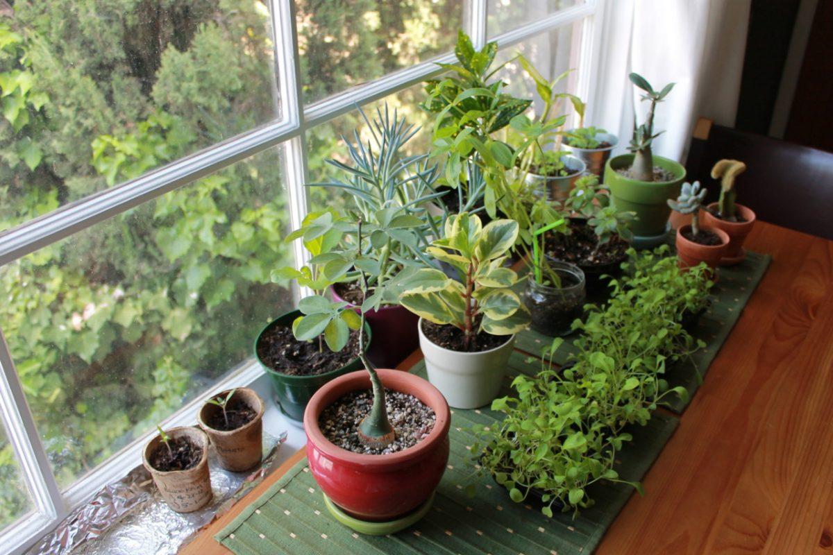 Quando o jardim invade o quarto – plantas para a hora do sono