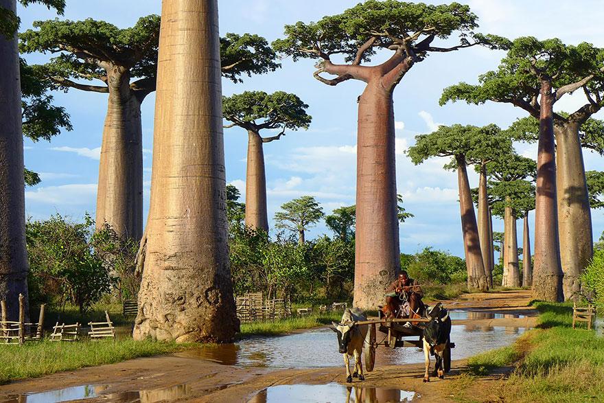 Pelo mundo: a calçada da fama das árvores