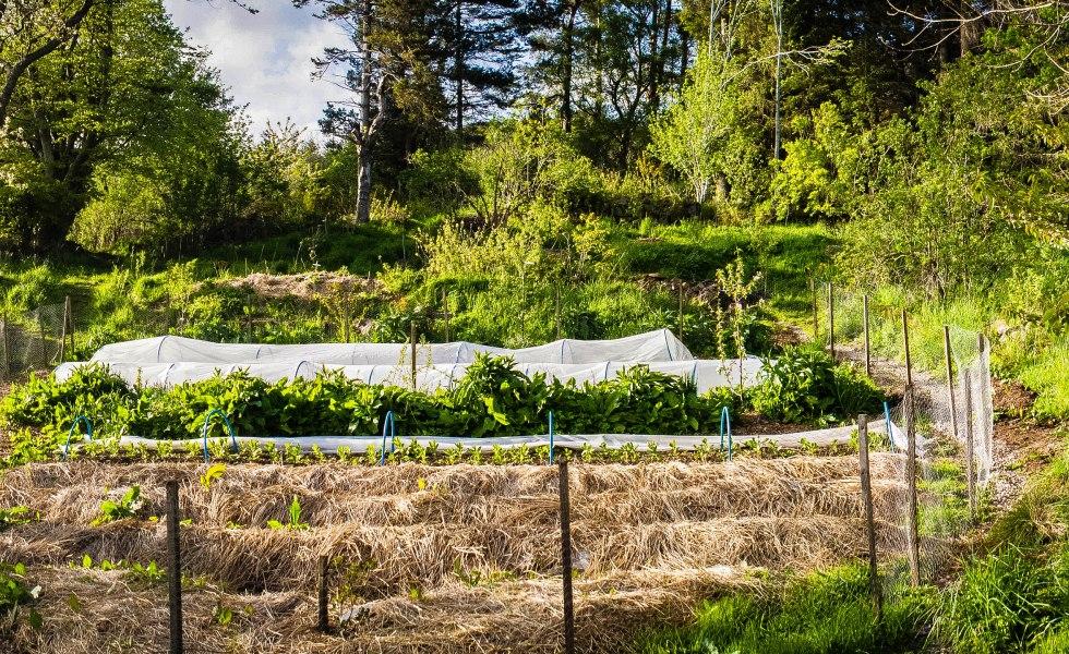Conheça Mais Sobre a Agricultura Sinérgica