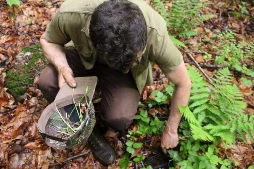 10 plantas silvestres para você conhecer e comer à vontade