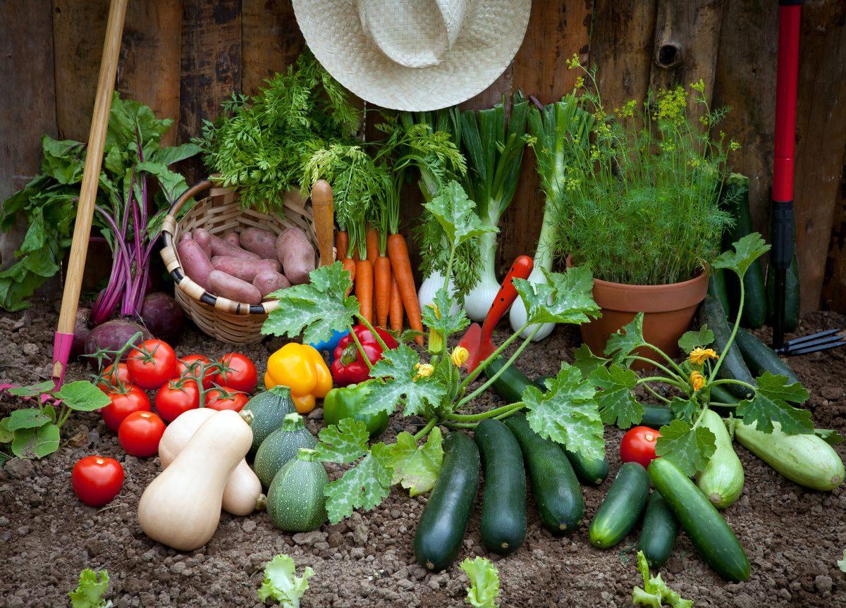 10 vegetais de rápido cultivo