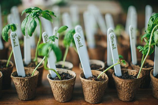 Estudos comprovam que as plantas reagem a sua energia!