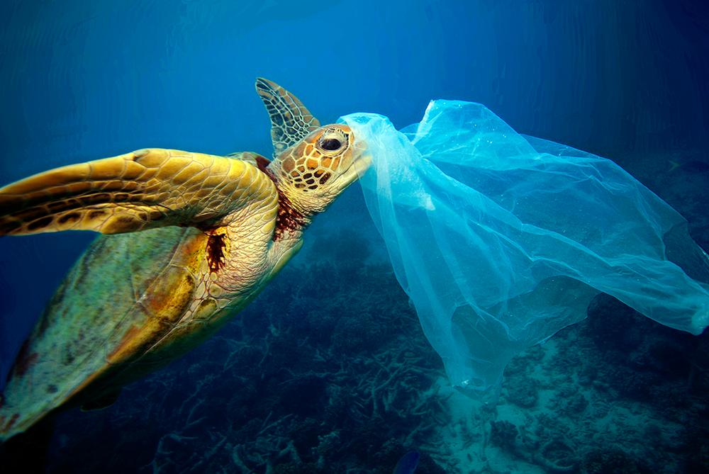 Campanha Mares Limpos da ONU Meio Ambiente visa combater a poluição por plástico nos oceanos