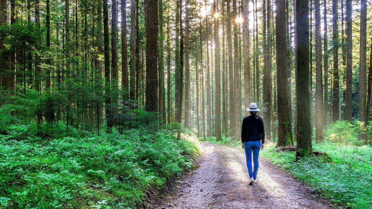 Estudo comprova: 90 minutos na natureza são o suficiente para provocar mudanças no cérebro