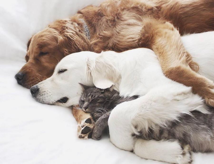 5 coisas que você pode aprender com seu animal de estimação
