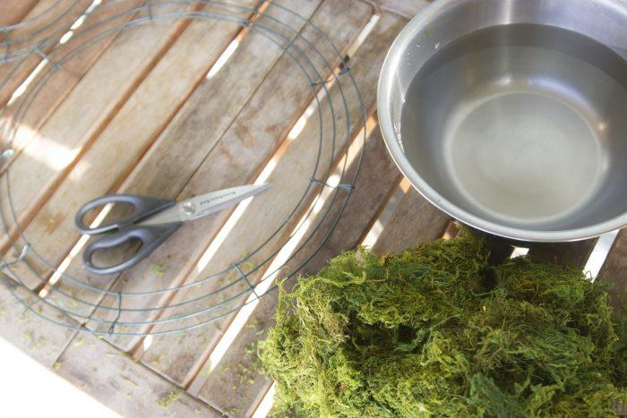 Moldar o musgo