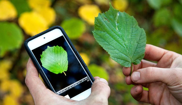 Conheça 17 aplicativos para uma vida mais saudável, alegre e organizada