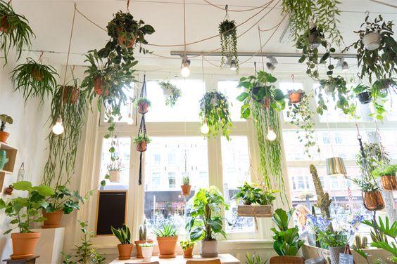 Como plantar e cuidar de ervas dentro de casa