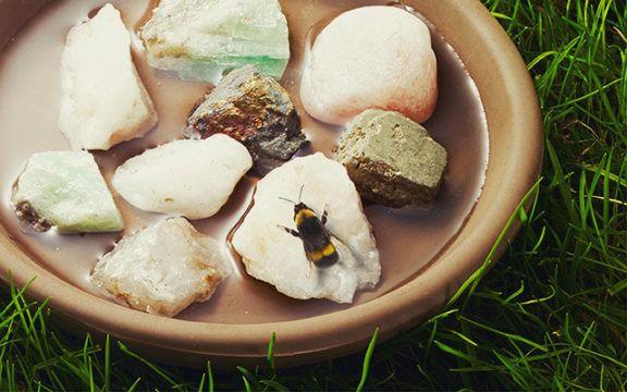 Banho de abelha – Saiba como fazer e ter no seu jardim