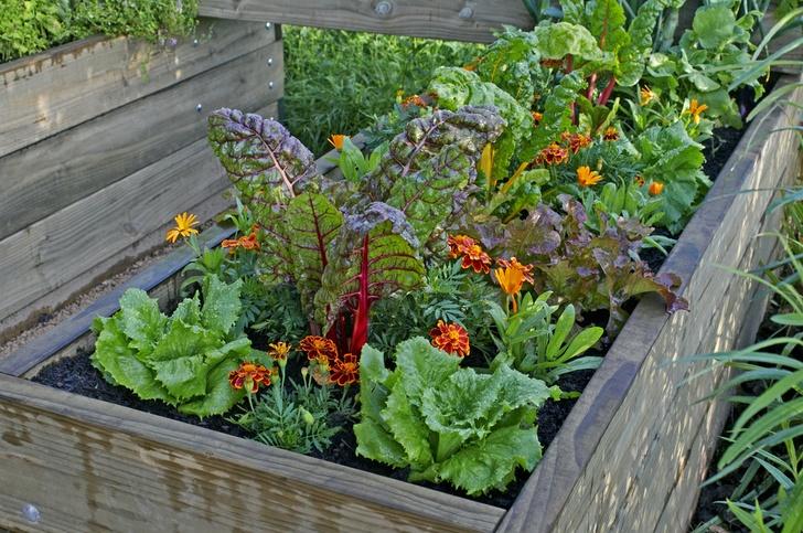 5 melhores vegetais para cultivar em canteiros elevados