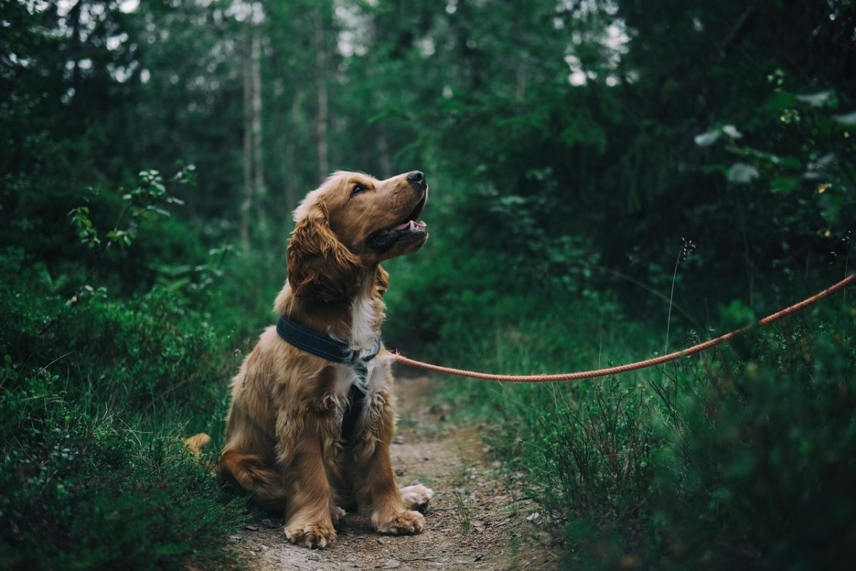 6 óleos essenciais benéficos para os cães