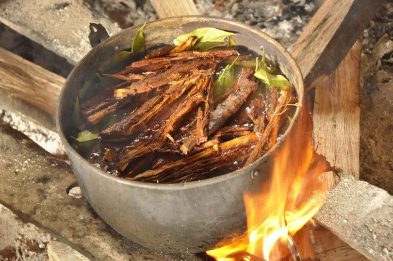 Ayahuasca – a bebida que pode curar alcoolismo e depressão