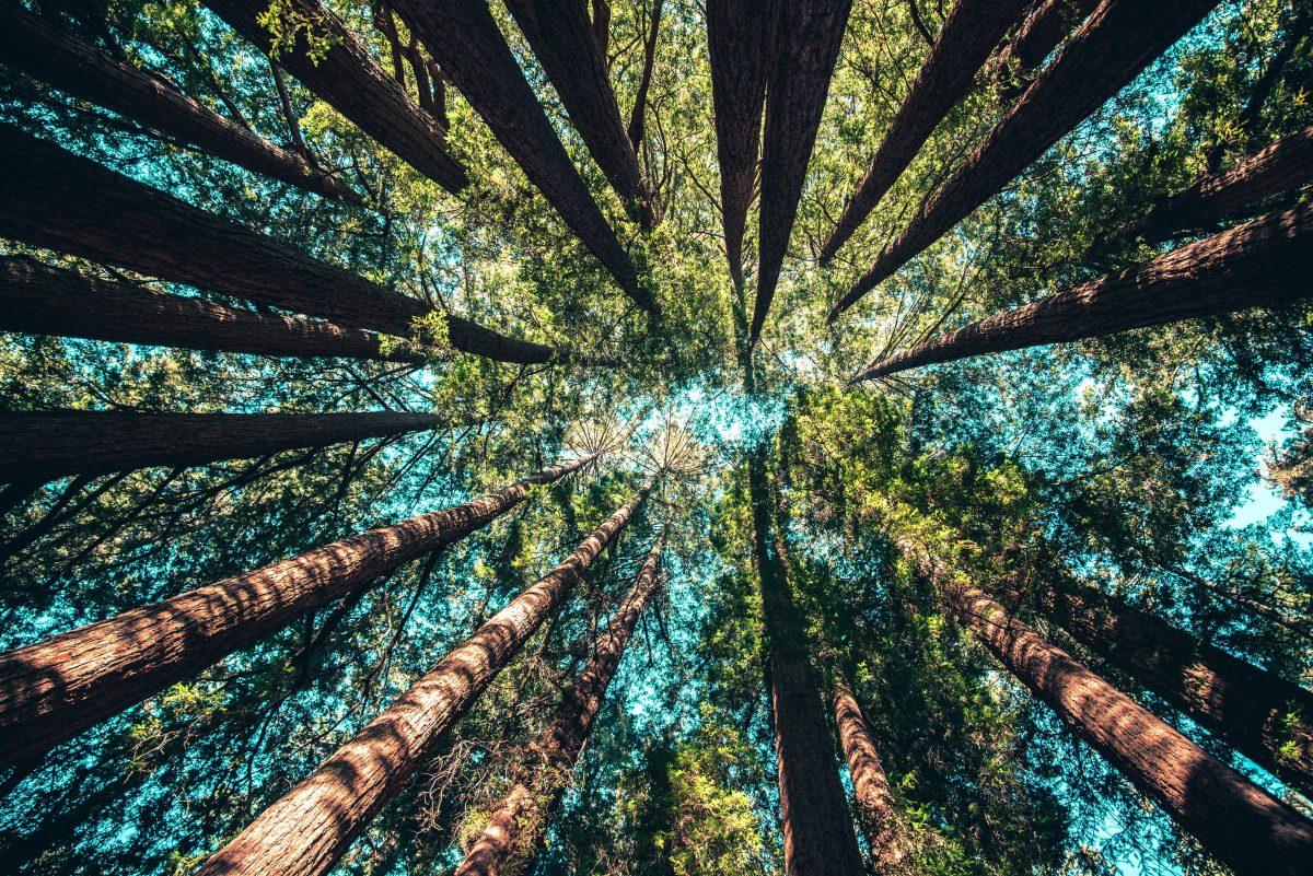 A natureza tem muito a nos dizer sobre os segredos da vida