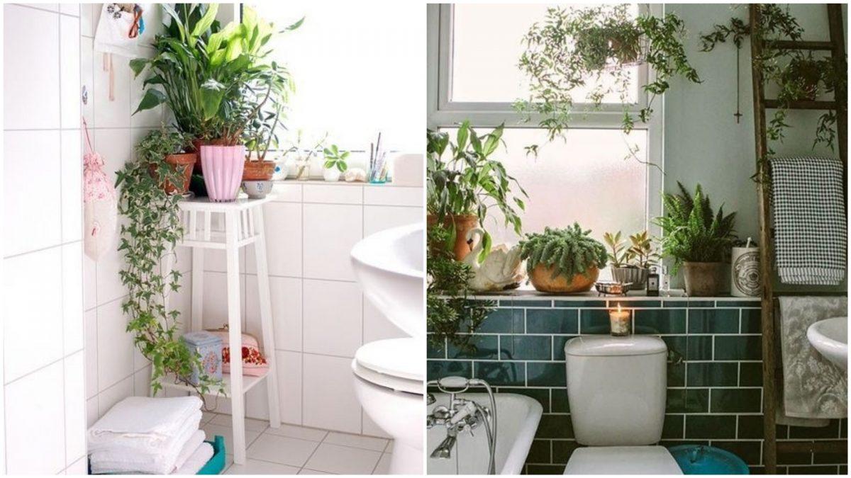 13 plantas perfeitas para cultivar no banheiro