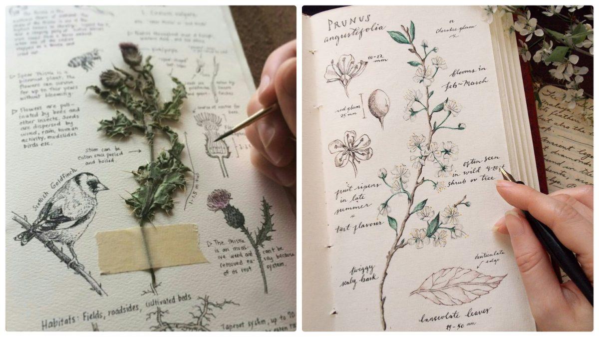 Aprenda a fazer um diário de plantas medicinais