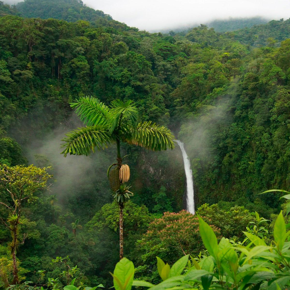 4 motivos do porque a Amazônia é vital para o mundo