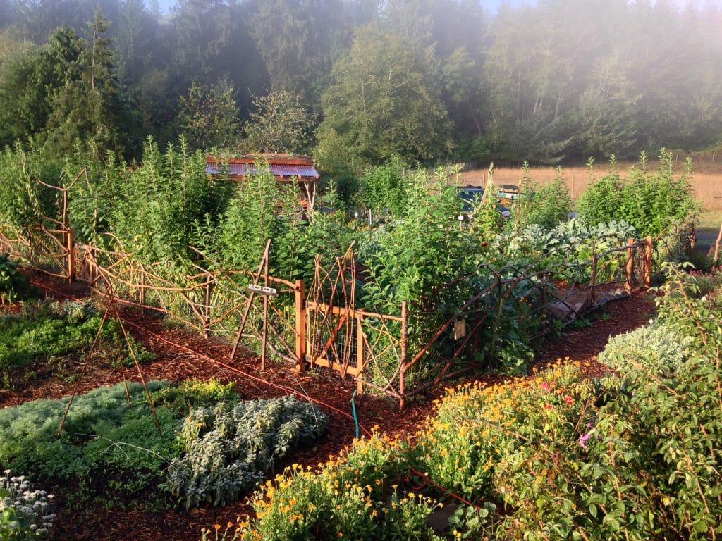 Documentário: A revolução da horta caseira