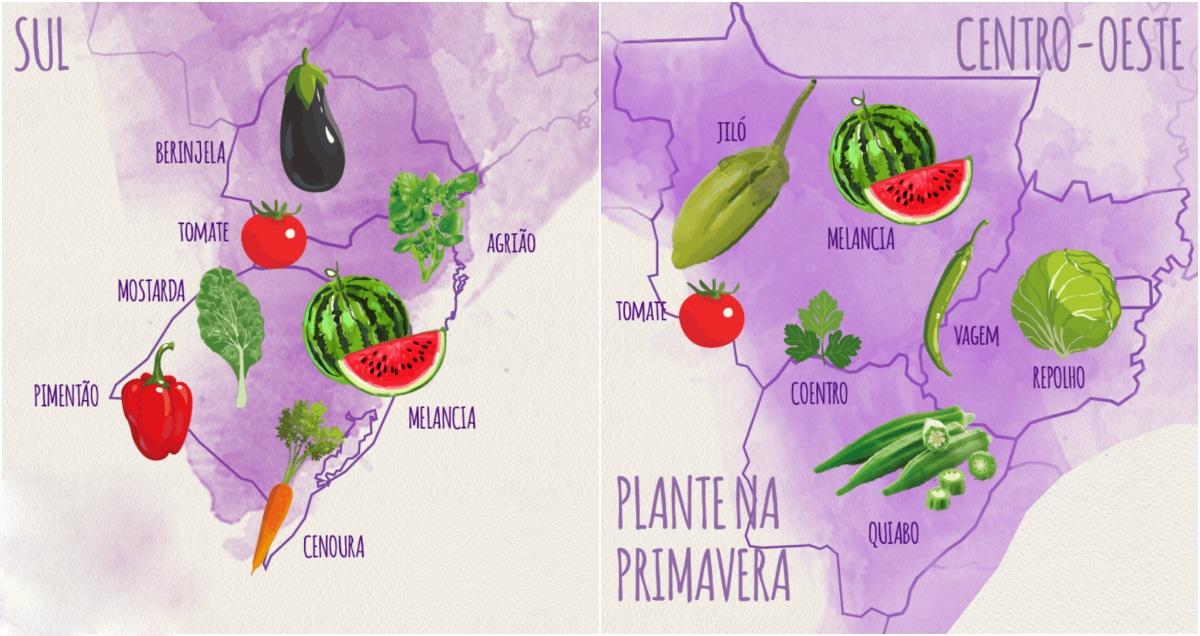 Descubra o que plantar na sua região durante a Primavera