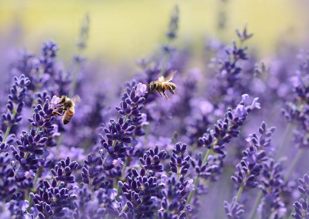 Saiba como evitar o desaparecimento das abelhas