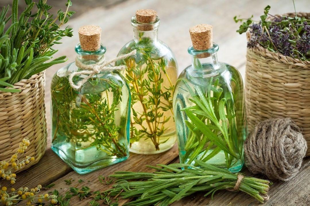 5 remédios naturais para cultivar em casa
