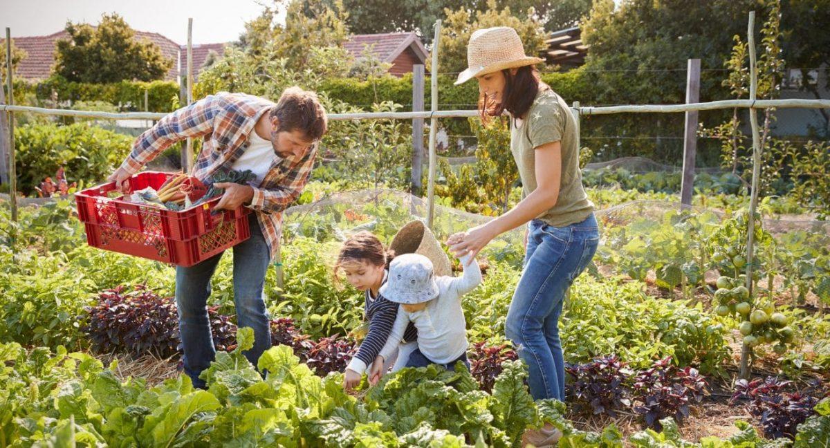 Saiba como seu sítio pode sustentar sua família