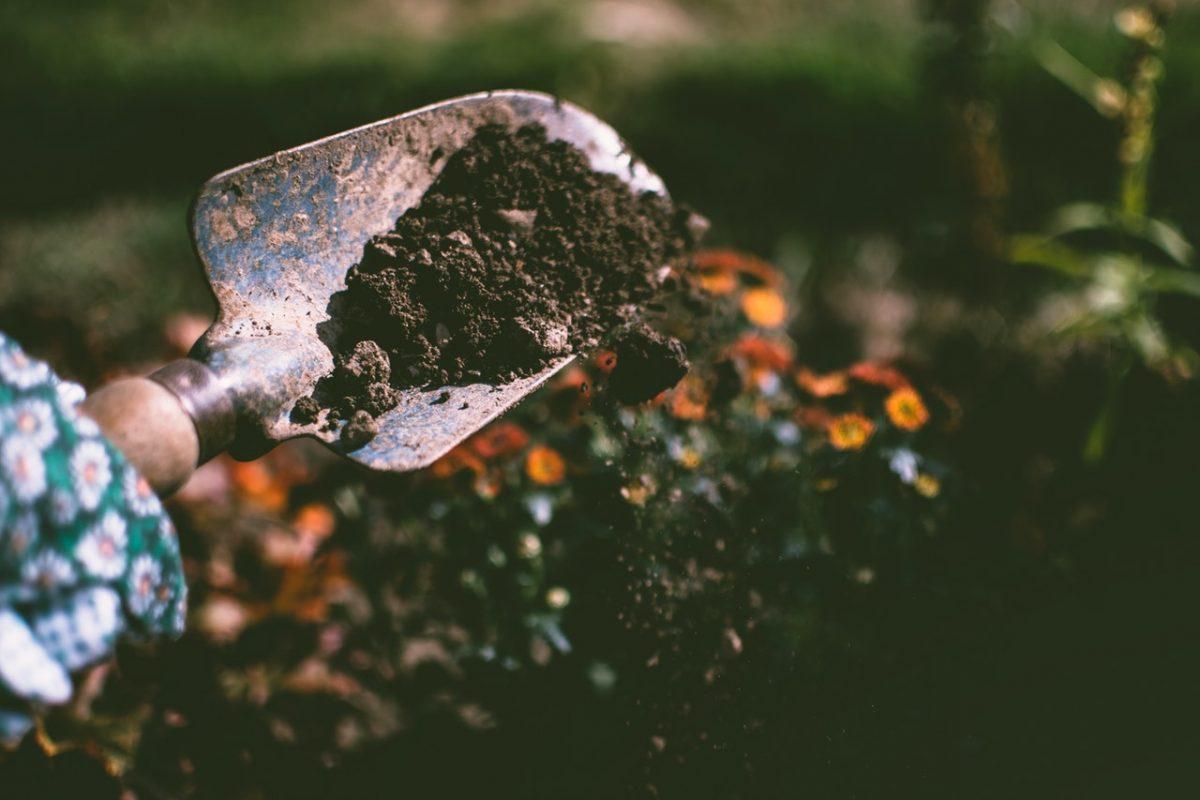 Saiba como corrigir a deficiência de nitrogênio do solo de forma natural