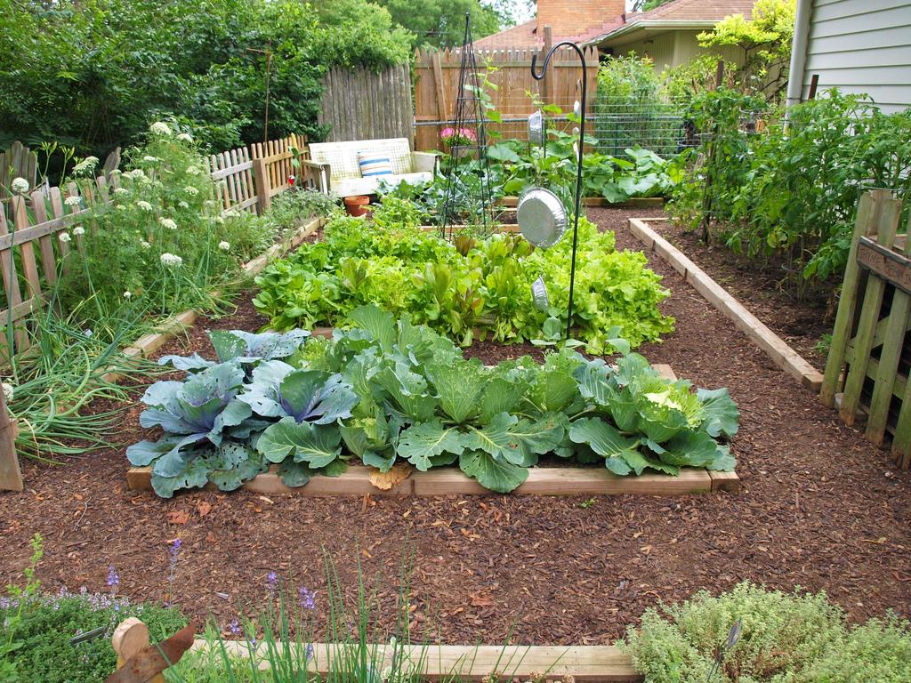 Horta para Ansiosos: Vegetais que crescem em menos de 2 meses