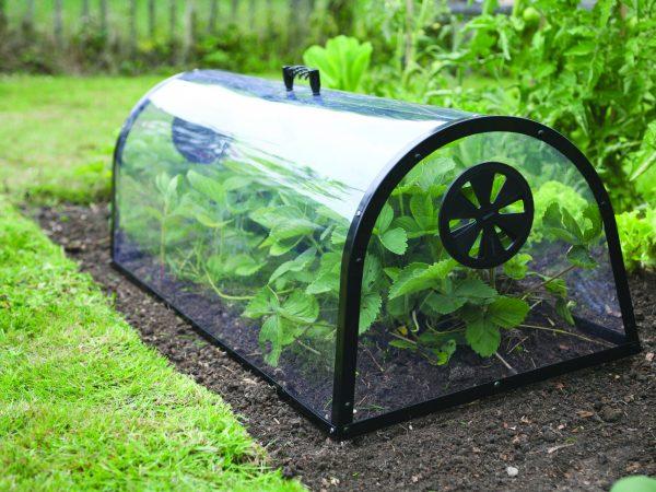 GEADA – 5 Formas de proteger as plantas
