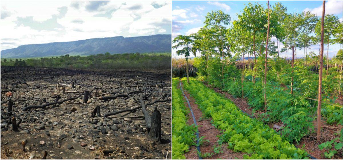 Agrofloresta – 50 kg de alimentos em 100m quadrados