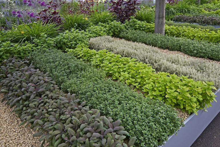 plantar ervas medicinais